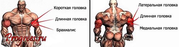 kak-nakachat-bolshie-ryki-biceps-i-triceps 2