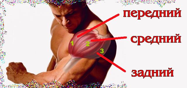 kak-nachachat-srednie-i-zadnie-delti-luchie-yprazneniya-na-plechi--2