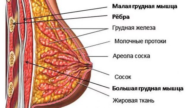 kak-nakachat-grud-devushki-v-domashnih-usloviyh--21
