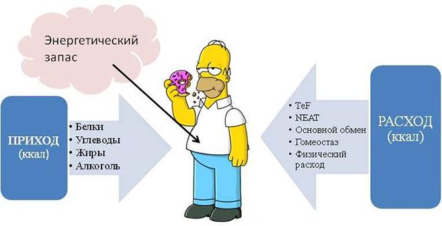 kak-uskorit-obmen-veshestv-i-sbrosit-lishni-ves-metabolism-prostim-yazikom-02